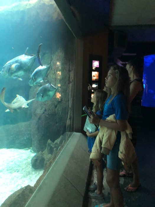 observing the organisms of food web at the aquarium